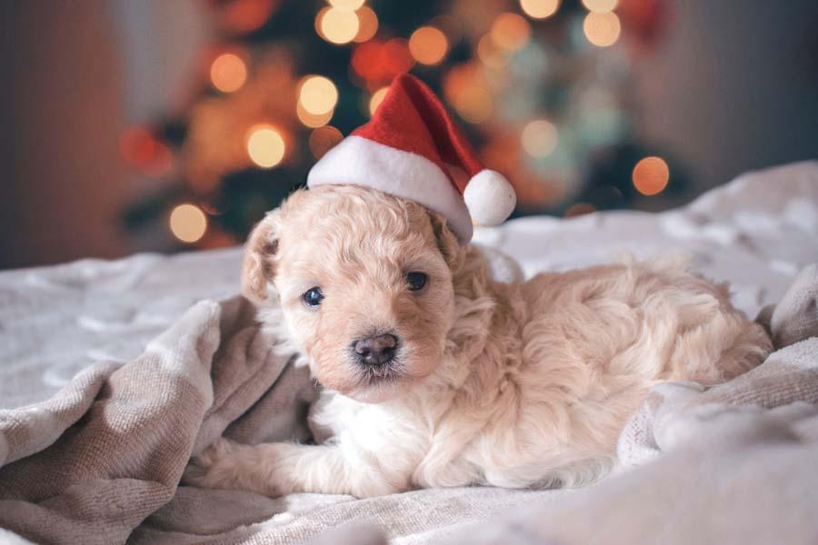 クリスマスプレゼントのトレンド