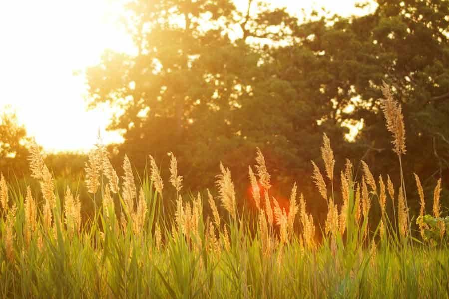 五穀豊穣を祈る縁起物