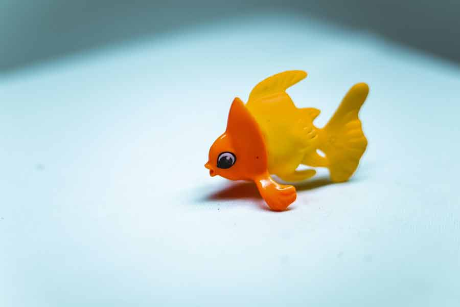 金魚ギフト
