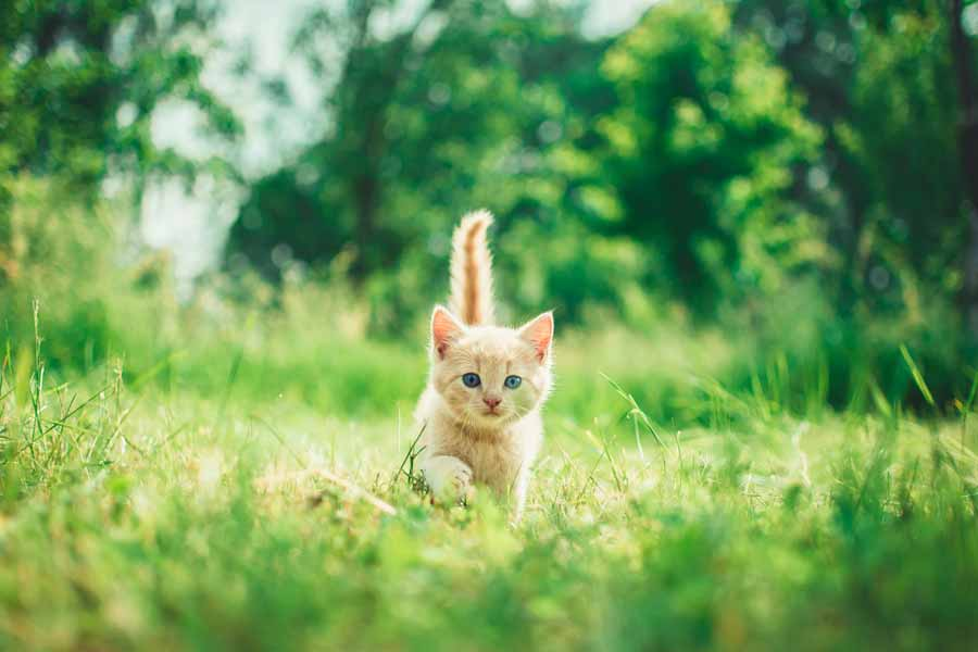 招き猫ギフト
