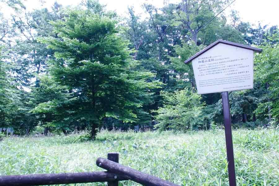 井の頭恩師公園